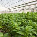 אבוג'ן השלימה בהצלחה תכנית ל-ולידציה של מקור חדש לגנים לשיפור תכונות בצמחים